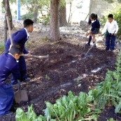 Community garden project, ongoing