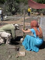 2010: garden fence setup