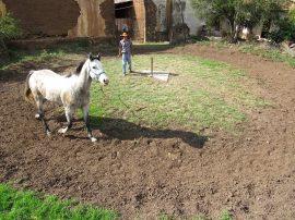 Solar Clock by Nelson Barrera (CUBA) in horse stables.