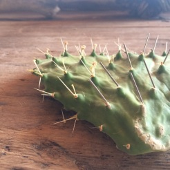 Project: Cactus Accupuncture